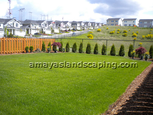 Lawn AFTER installation with sod, bushes, trees, and bark.